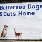 Battersea Collars and Coats